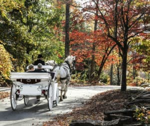 Get cozy on a carriage ride on your romantic getaway or honeymoon.