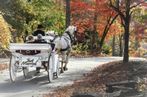 Grand Entrance and Just Married Rides by Horse Drawn Carriage
